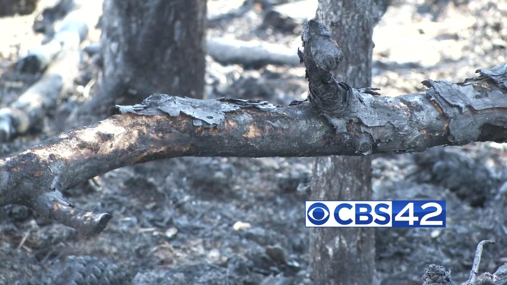 Calhoun County vegetation fires
