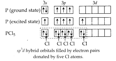 NCERT Solutions for Class 11 Chemistry Chapter 4 Chemical Bonding and Molecular Structure 31