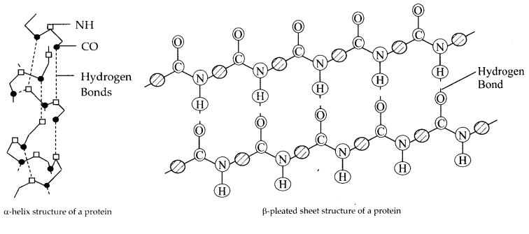 NCERT Solutions for Class 12 Chemistry Chapter 14 Biomolecules 8