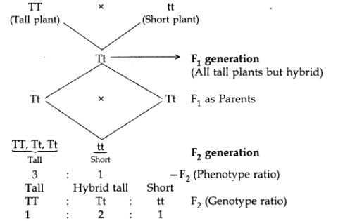 Heredity and Evolution Class 10 Important Questions with Answers Science Chapter 9, 10