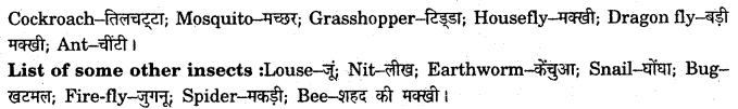 NCERT Solutions for Class 7 English Honeycomb Chapter 7 The Invention of Vita Wonk 1