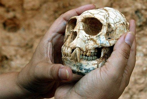 Mesopithecus pentelicus skull found