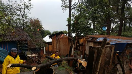 Brindan atención a reportes de árboles caídos en la ciudad