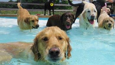 Cómo cuidar a tu mascota de un golpe de calor