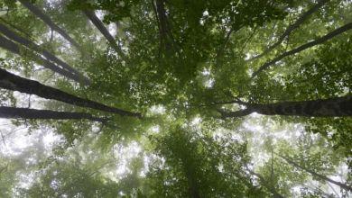 Niño de dos años sobrevive tres días perdido en un bosque