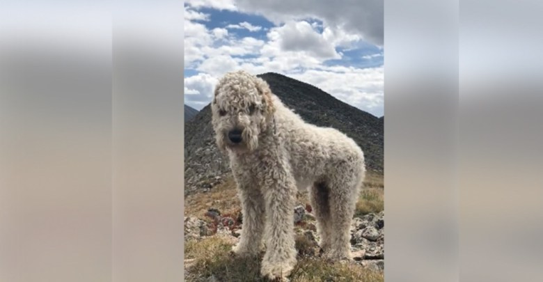 VIDEO: Perro espera en el lugar donde murió su dueña