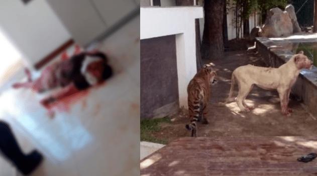 Ataca Leon a hombre en un domicilio de rincones de San Marcos