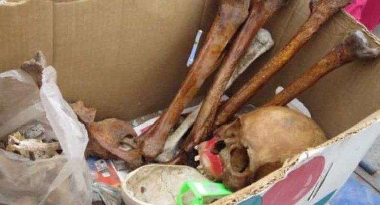 En México es posible comprar huesos humanos desde 20 pesos para prácticas médicas o rituales