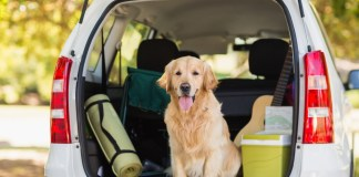 cars for dog lovers