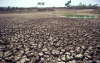 WARMING: Parched earth stretches almost to the horizon in a field near Gujarath, western India, in 2001. Picture: BLOOMBERG