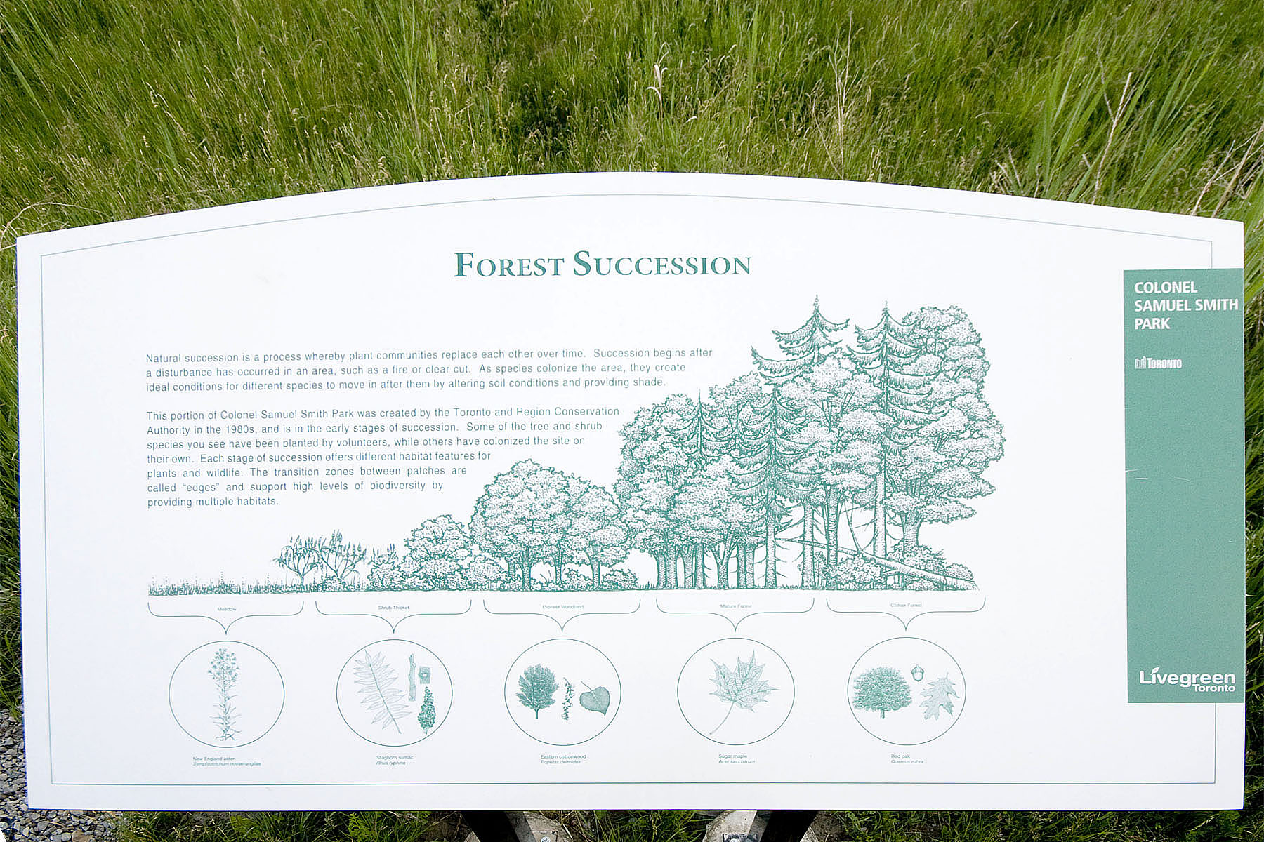 Forest Succession Pictures To Pin