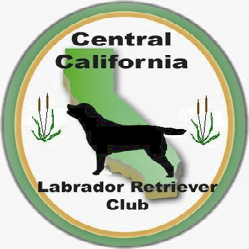cclrc-logo-square