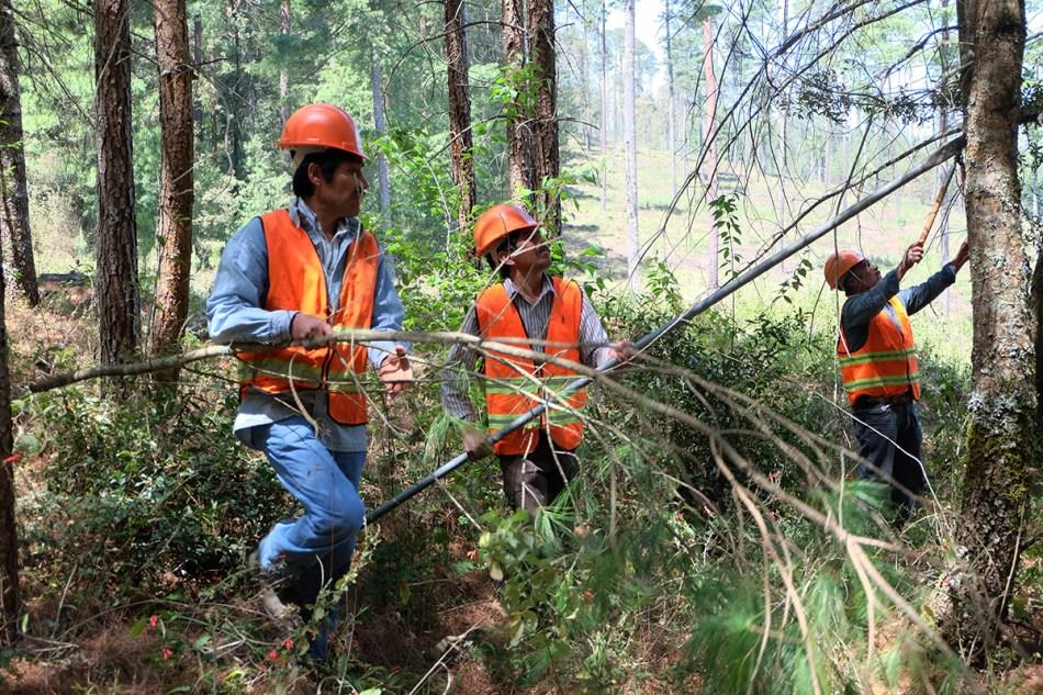 Acolihuia-manejo forestal comunitario-bosques-mexico-puebla