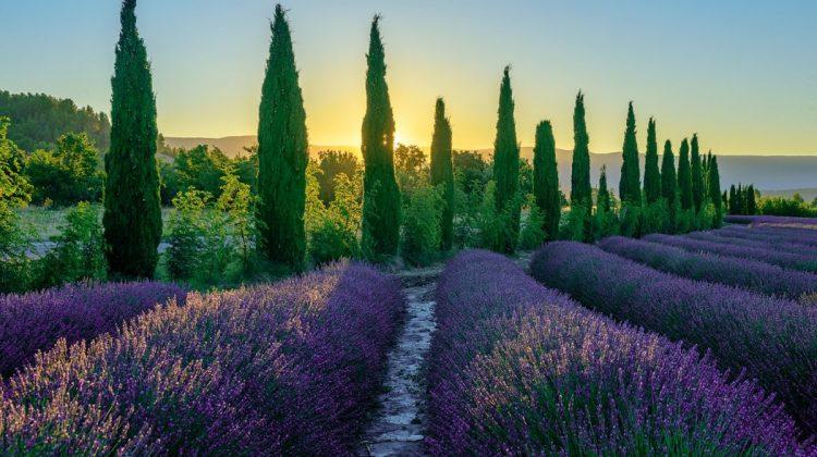 Photo Workshops Provence 2020