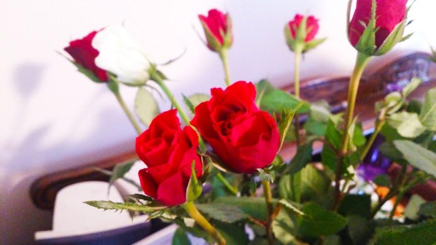 roses_031113