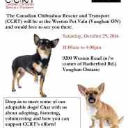 CCRT & Pet Valu Vaughan Rescue/Awareness Event