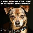 Criminally Awesome!