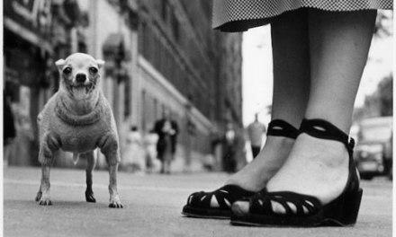 Streetpher: i fotografi che hanno fatto grande la fotografia di strada