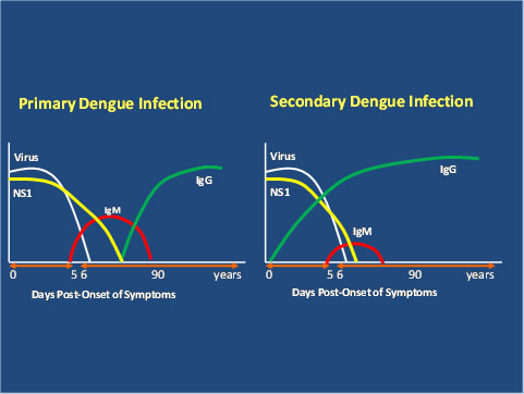 image: showing comparison between primary and seconcary infections