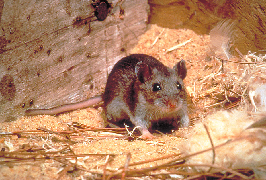 Hantavirus | Disease of the Week | CDC