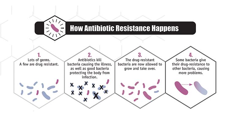 antibiotic resistance bacteria diagram