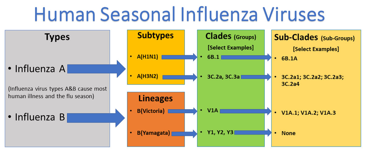 Types of Influenza Viruses | CDC
