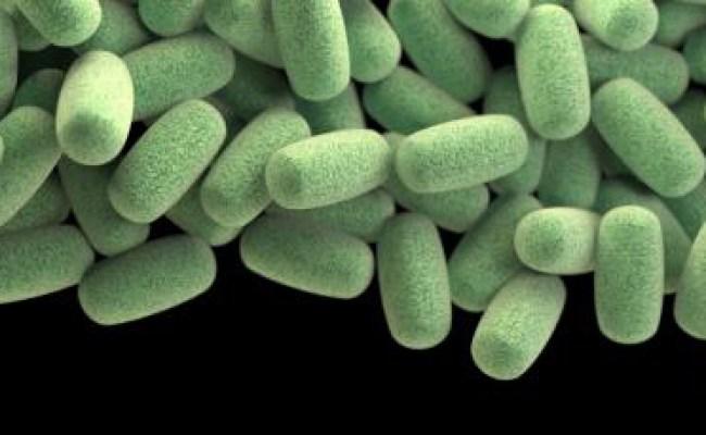 Clostridium Perfringens C Perfringens Foodborne