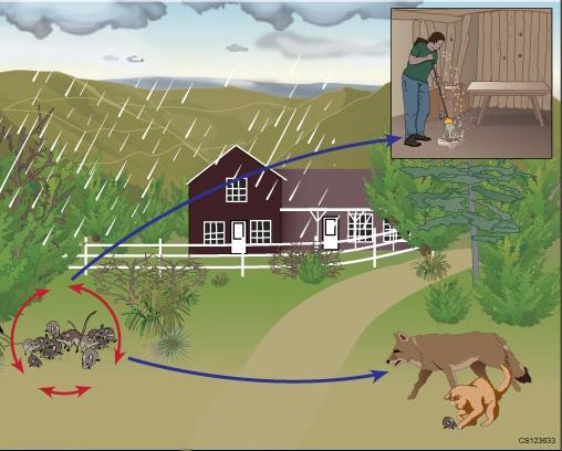Ecology | Hantavirus | DHCPP | CDC