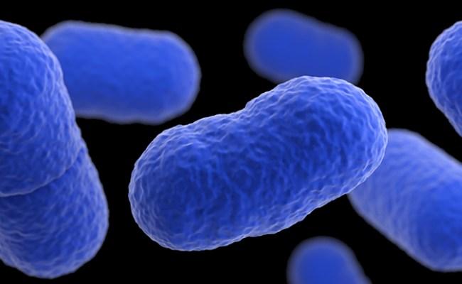 Listeria Listeriosis Listeria Cdc