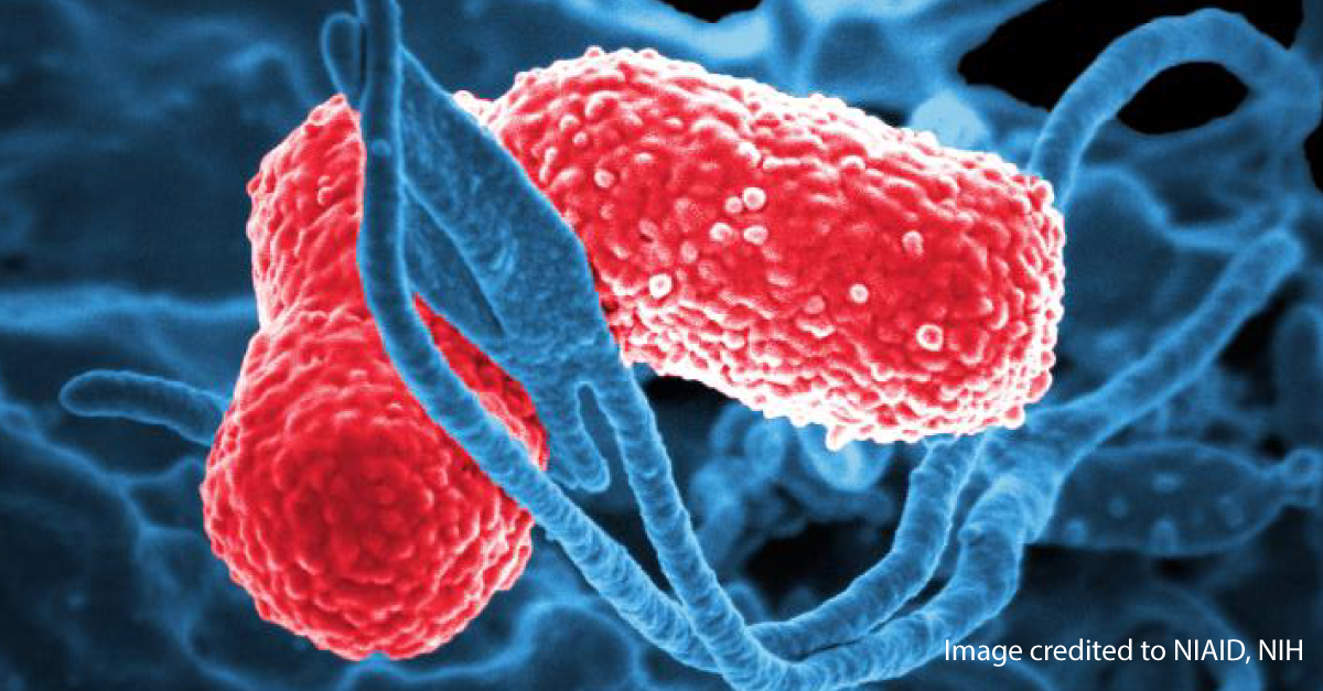 Notes from the Field: Carbapenem-resistant Klebsiella ...