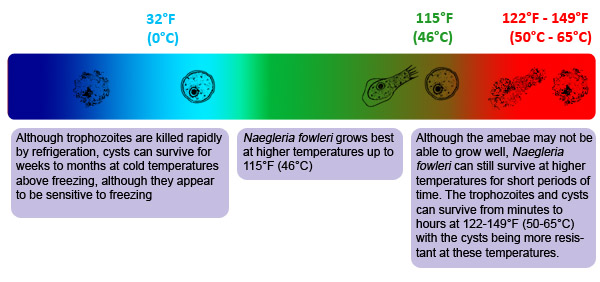 linear colored chart showing temperatures at which Naegleria fowleri can survive and be inactivated. It shows gradation from dark blue, to light blue, to green, to red to illustrate the rise in temperatures. Drawings of the cyst form and the trophozoite form are shown intact at the temperatures which Naegleria survives and grows. They are shown becoming inactive at the extreme low and high temperatures.