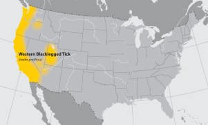 Map of the United States showing the approximate distribution of the Western blacklegged tick. The area affected is the western coast.