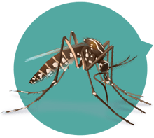 Conduct mosquito surveillance