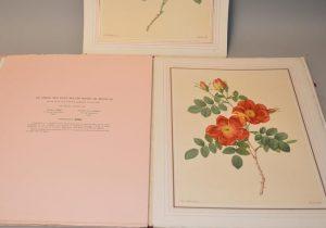Choix des plus belles roses. Souvenir de Bagatelle.