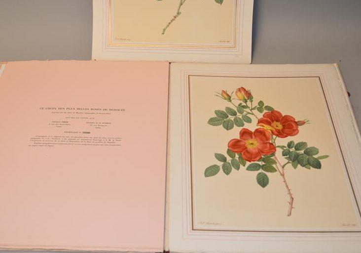 Choix des plus belles roses. rose flower lithograph
