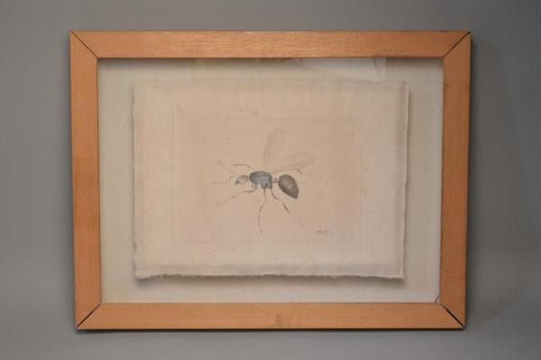 LA ROCHE LAFFITTE (1943) - dessin aquarelle sur tissu - étude de moustique - insecte