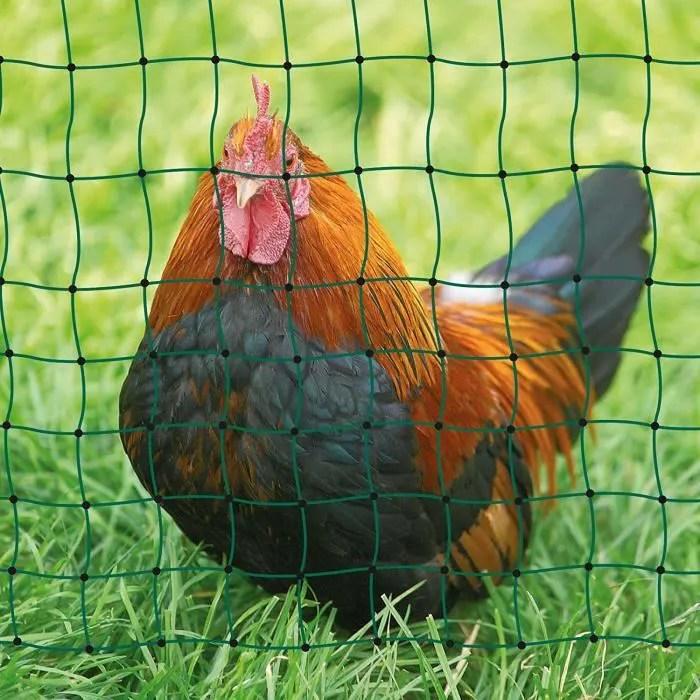 filet poule 15m hauteur 1 12m double pointe poultr
