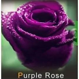 20 graines de rose rosiers couleur