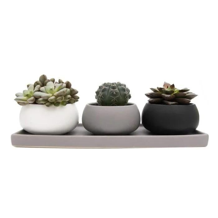 7 5cm pot de succulente avec plateau rectangulaire