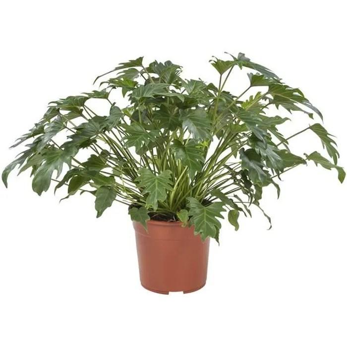 plante verte avec cache pot pierre bleu