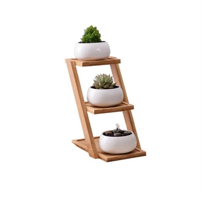 plantes succulentes avec plateau
