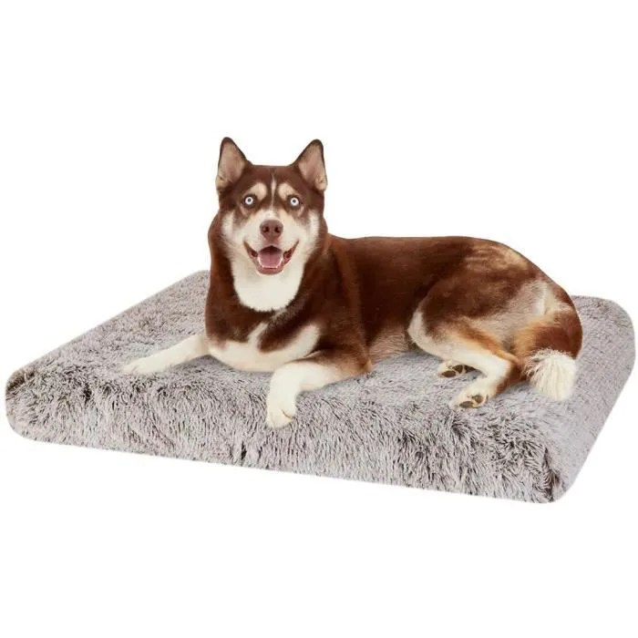 bingopaw coussin chien grande taille