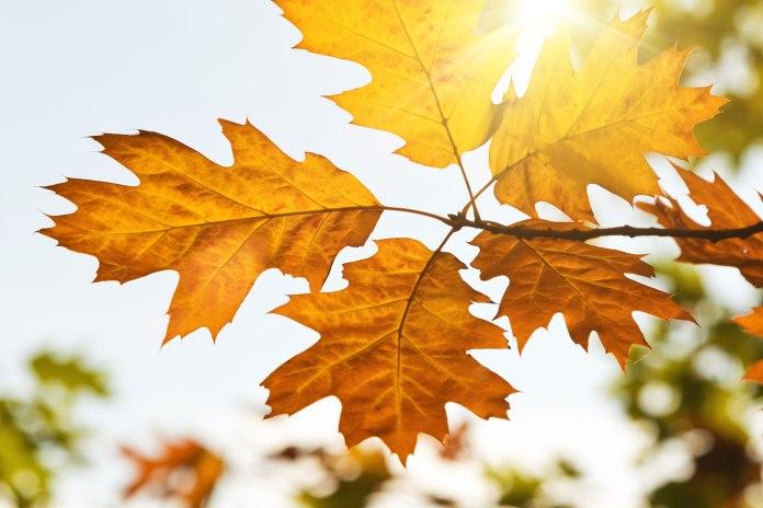 autumn-leaves-in-the-sun-of-light.jpg