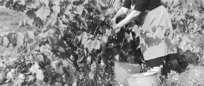 """Taula Rodona """"Dones pageses, d'ahir i d'avui"""""""
