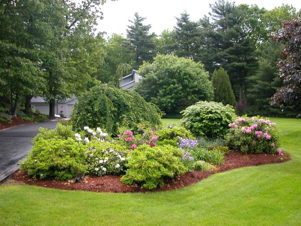 Front Yard Landscaping with Trees Designs