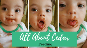 All About Cedar- feeding