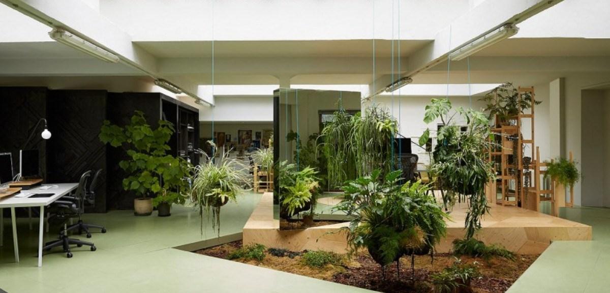 Health Benefits of Some Indoor Plants
