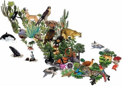 biodiversidad_mexicana_01