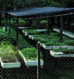 5-8_restauracion-ecologica_mcomillas