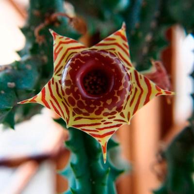 Mandalas em Flores 11